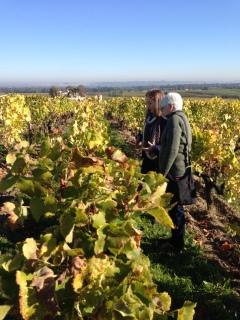 Clos-Haut Payraguey vines