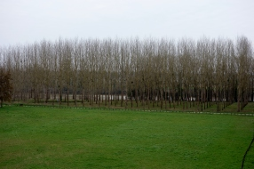 Along the Garonne