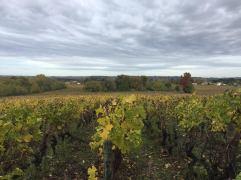 Vines fall